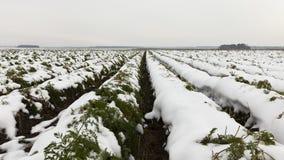 农业领域,红萝卜 图库摄影