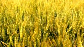 农业领域 股票录像
