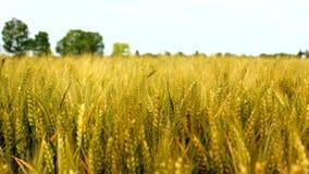 农业领域 股票视频