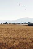 农业风景在普罗旺斯,法国 免版税库存图片