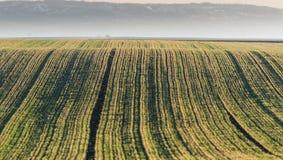 农业风景,可耕的庄稼领域 免版税库存照片