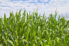 农业风景 免版税库存照片