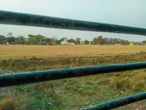 农业麦子 免版税库存照片