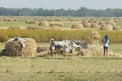 农业,埃塞俄比亚,非洲 免版税图库摄影