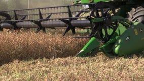 农业组合机器收获成熟干豌豆增长 影视素材
