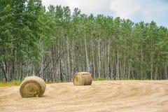 农业-备草粮-圆的大包-亚斯本树丛 库存图片