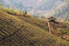 农业-多小山泰国乡下 免版税库存照片