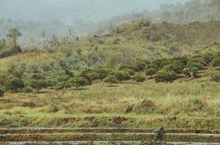 农业-泰国乡下早晨 免版税库存图片