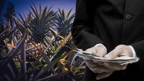 农产品定价概念,商人买的菠萝 图库摄影