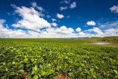 农厂农业夏天庄稼水坝蓝色云彩吹 免版税图库摄影