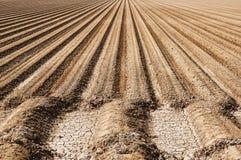 农厂土壤行 免版税图库摄影