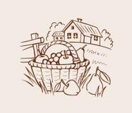 农厂在草的水果篮 免版税库存图片