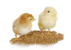 农厂家禽 免版税库存照片