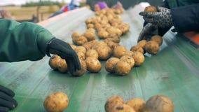 农厂工人排序在一条移动的线的土豆,关闭  股票录像