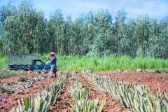 农厂工人 库存照片