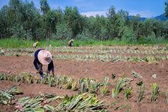 农厂工人 免版税图库摄影