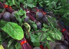 农厂新鲜的甜菜 免版税库存图片