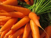 农厂新鲜的红萝卜 库存照片