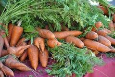 农厂新鲜的红萝卜 免版税图库摄影