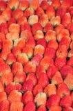 农厂新鲜的草莓 库存图片