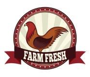 农厂新鲜的鸡 库存图片