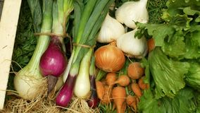 农厂有机蔬菜直接地从庭院红萝卜,黄色和红洋葱,大蒜,绿色莴苣沙拉,全部在木头 股票录像