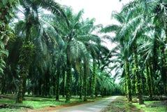 农厂油棕榈树 免版税库存照片