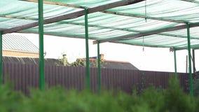农厂浪花工业系统 幼木的灌溉 影视素材