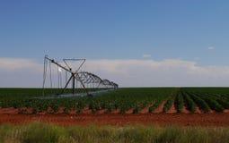 农厂灌溉 库存照片