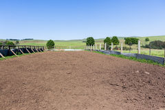 农厂牛动物畜栏笔 免版税库存照片