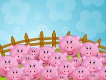 农厂猪 免版税图库摄影