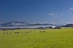 农厂瑞士 库存图片