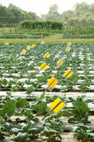 农厂研究蔬菜 库存照片