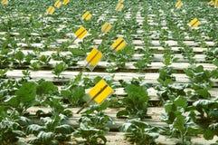 农厂研究蔬菜 图库摄影