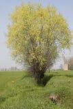 农厂结构树 免版税图库摄影