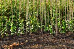 农厂苗圃结构树 免版税库存照片