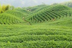 农厂茶 免版税库存照片
