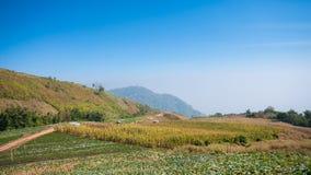 农厂草莓在山的无头甘蓝玉米 免版税图库摄影