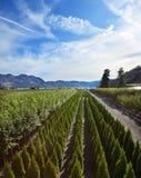 农厂风景结构树 库存图片