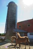 农厂马 图库摄影