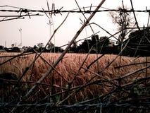 农厂麦子 免版税库存照片