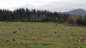 农厂grassfield 免版税图库摄影