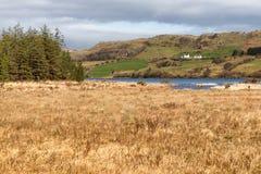农场、森林和植被在西部方式足迹在港湾Corrib 免版税库存照片