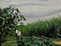 农场和沙漠 图库摄影