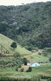 农场和砍伐森林在南巴西 免版税库存照片