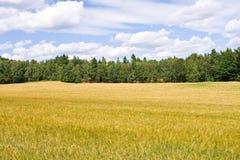 农场土地 免版税图库摄影