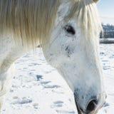 农场在与马的冬天 免版税库存图片