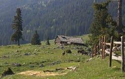 农场在山草甸 免版税库存照片