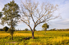 农场在潘塔纳尔湿地,马托格罗索州(巴西) 库存照片