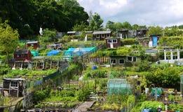 农场在爱丁堡 库存图片